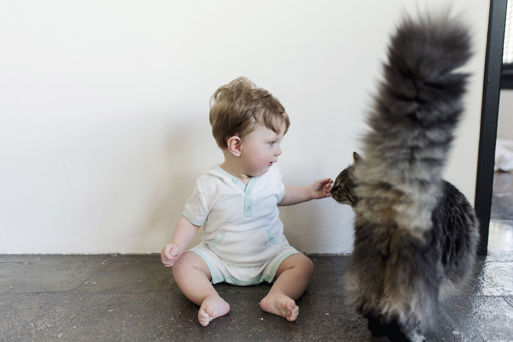 8-month-old baby boy meets a cat | Happy Grey Lucky
