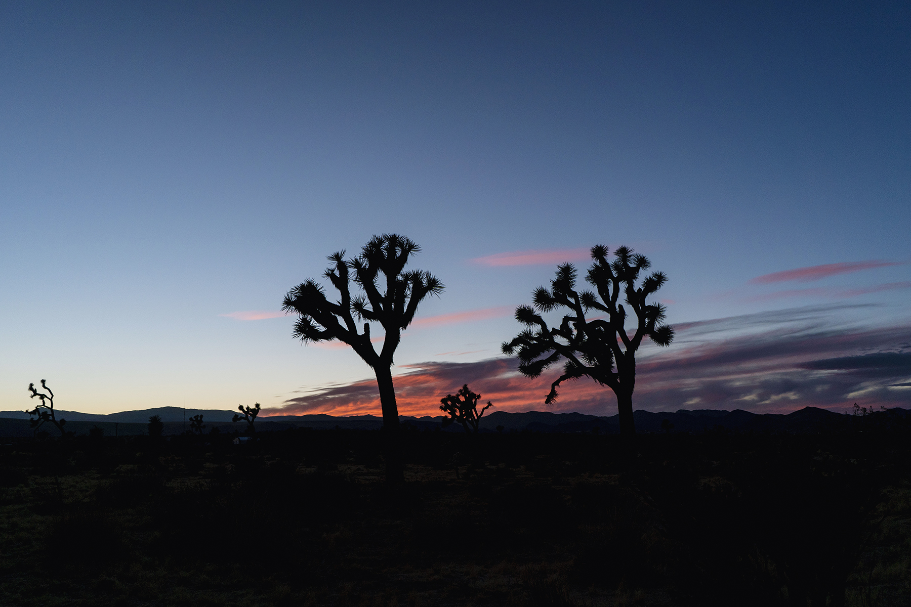Mojave Desert sunset, California - Joshua trees | Sisters Trip to California | Happy Grey Lucky