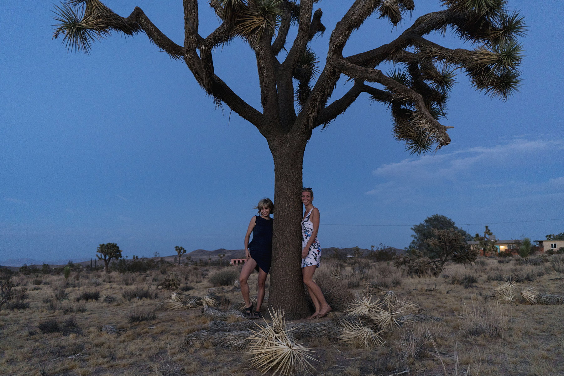 Joshua tree in Mojave Desert at night, California | Sisters Trip to California | Happy Grey Lucky