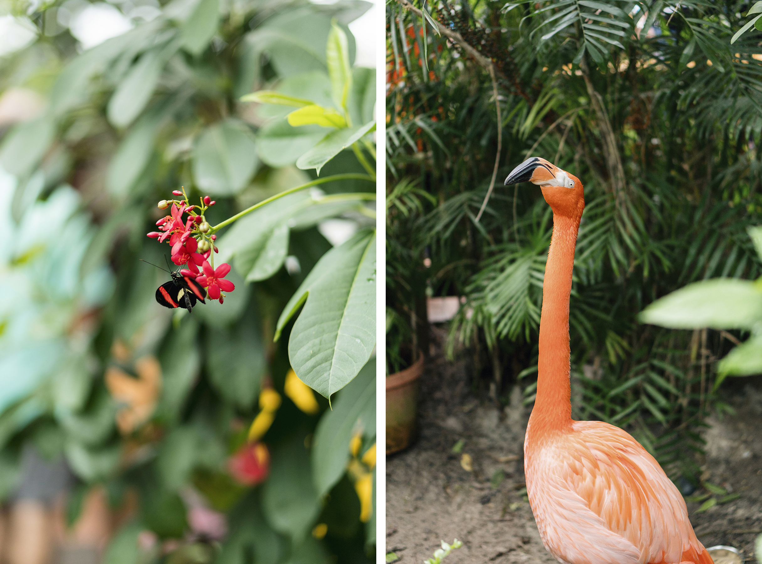 Key West Butterfly and Nature Conservatory - Florida Keys with young kids | Happy Grey Lucky