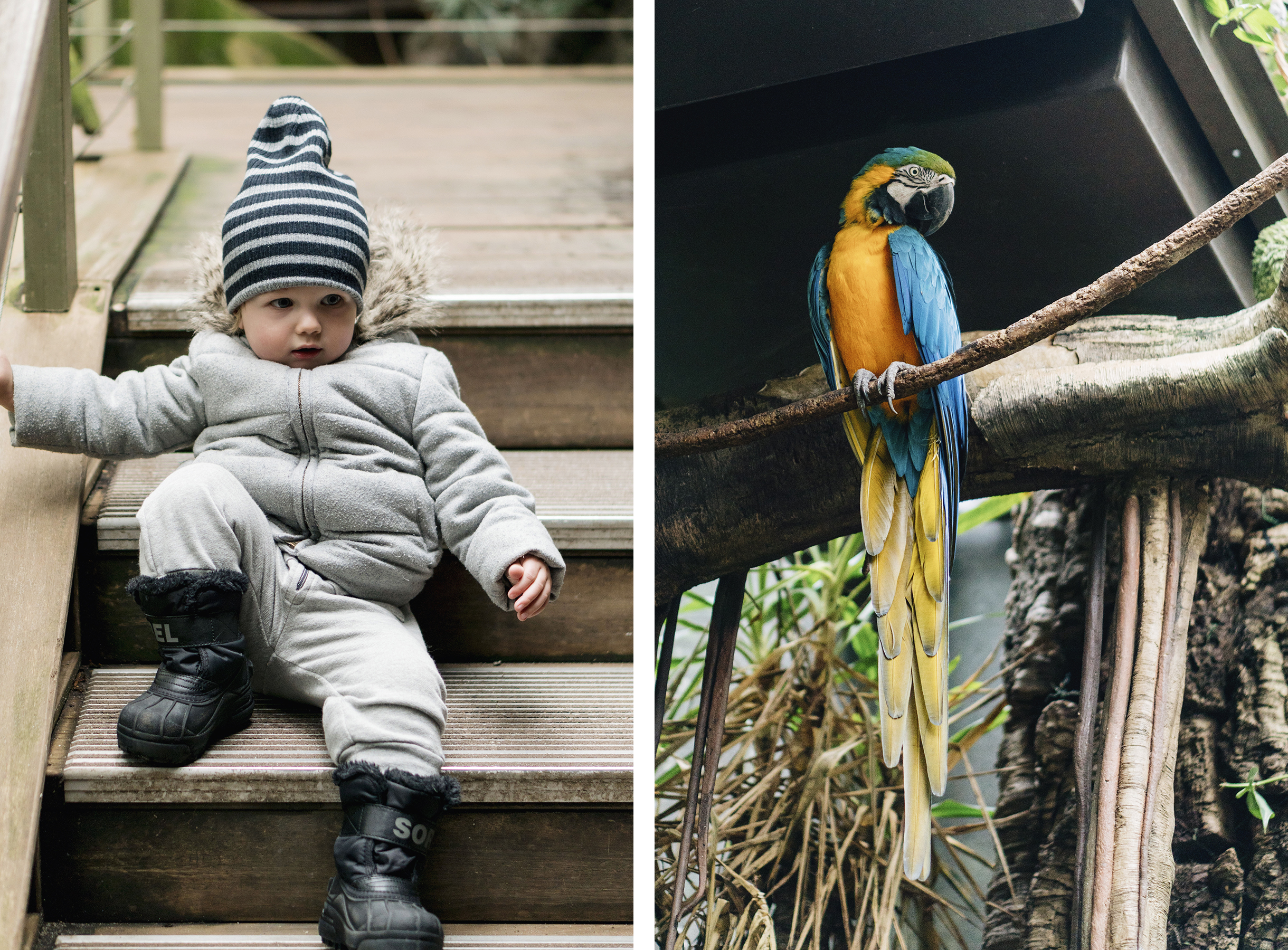 Central Park Zoo - Top 10 things to do in NYC with young kids | New York City travel guide